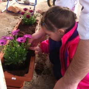 My granddaughter planting flowers for Tu B'Shvat