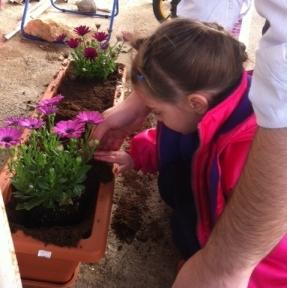 My granddaughter planting flowers for Tu B'Shvat