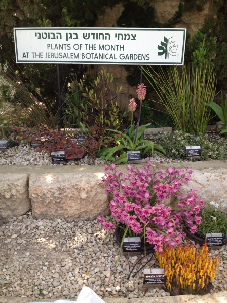 Plants of the month