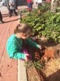 Tehila planting