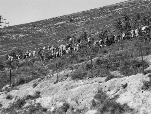 Planting trees on the barren hills on the way to Jerusalem (circa 1930)